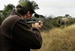 Des campagnes aériennes de contraception pour contrôler les populations d'éléphants en Afrique du Sud | Biodiversité | Scoop.it