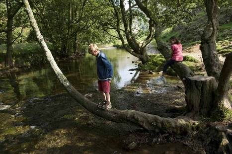 Swap Some Screen Time for WildTime | Unplug | Scoop.it