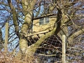 Il se construit une cabane sur un arbre... et doit la démolir   Immobilier   Scoop.it