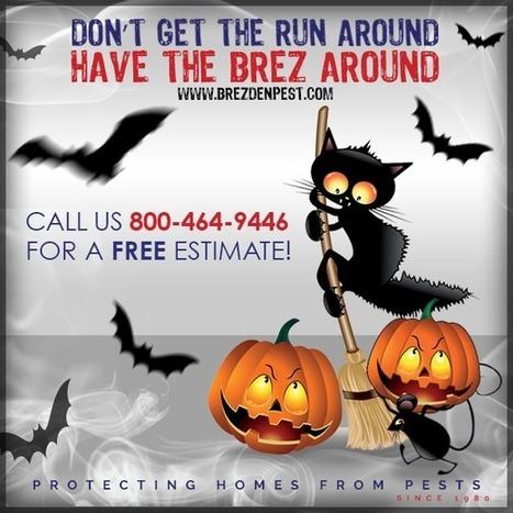 Happy Halloween from Brezden Pest Control | Property Management | Scoop.it