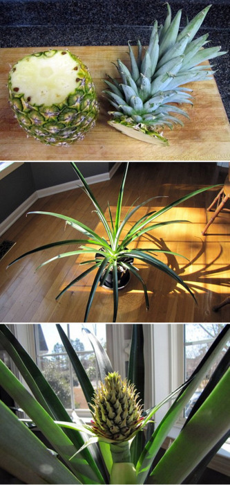 DIY of the day! Did you know that you can simply... | ModCloth on Tumblr | Flores y plantas | Scoop.it