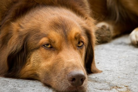 Euthansia can be a tough choice for pet owners - Farm and Dairy | Veterinary News | Scoop.it