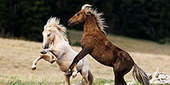 Cloud: Challenge of the Stallions - Introduction | Nature | PBS | DanyelleD 3 | Scoop.it