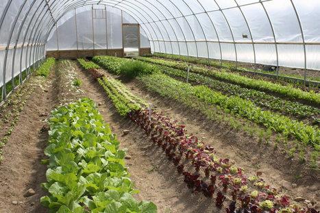 Los sustratos para la horticultura: El manejo del pH | Cultivos | Scoop.it