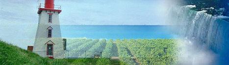 Niagara Wineries | Canadian Wineries | Scoop.it
