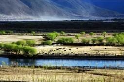 Picturesque Scenery along Niyang River   Tibet Travel Blog   tibte travel   Scoop.it