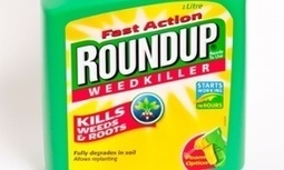 #Monsanto #Roundup 'probably' causes cancer, World Health Organisation says #WHO | Messenger for mother Earth | Scoop.it