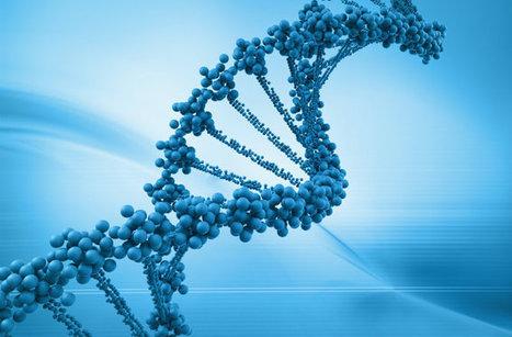 El ADN de las neuronas cambia en función del entorno | Educacion, ecologia y TIC | Scoop.it
