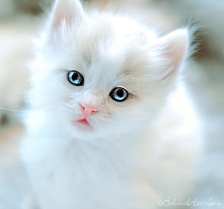 Oral Disease in Cats, Oral Problems in Cats   Affordable Cat and Dog Hospital   Scoop.it