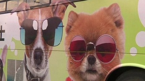 Dog friendly buses in Hong Kong | The Global Village | Scoop.it