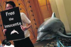 Dolphins cleared for export   Earth Island Institute Philippines   Scoop.it