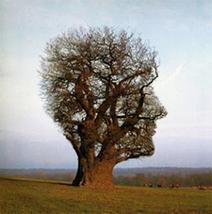 ''El ser humano es por lógica un ser conformado por pocas ... - Bitácora   Salud   Scoop.it