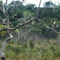 Amazon rainforest failing to recover after droughts | The Glory of the Garden | Scoop.it