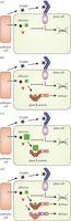 Elevating crop disease resistance with cloned genes | plant cell genetics | Scoop.it
