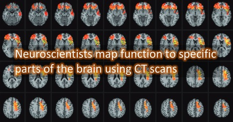 Mapping the social and cognitive functions of the brain | Biotech and Beyond | Scoop.it