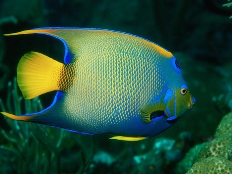 Anglefish! | All about water, the oceans, environmental issues | Scoop.it