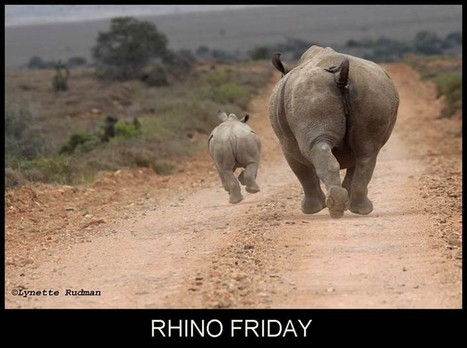 World Rhino Day 2013 - Call for Photos | What's Happening to Africa's Rhino? | Scoop.it