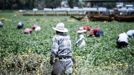 Nation's Farmworkers Demand Protections From Toxic Pesticides | Lauri's Environment Scope | Scoop.it