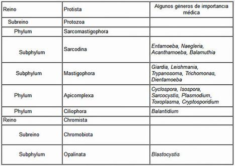 GENERALIDADES DE PROTOZOOS - Recursos en Parasitología - Departamento de Microbiología y Parasitología - UNAM   Microbiología   Scoop.it