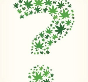 Yes or no? The cannabis question prevails | Store My Cannabis | Scoop.it