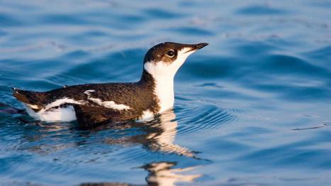 Este pájaro viaja 16.000 kilómetros cada año... sin motivo alguno. Noticias de Tecnología | Bichos en Clase | Scoop.it