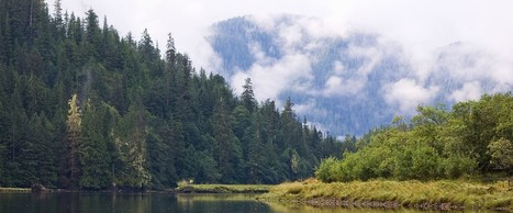 Canada just saved one of Earth's last temperate rainforests | Biodiversity protection | Scoop.it