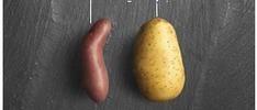 Les 10 bonnes raisons de savourer les frites avec McCain | Pommes de terre transformées | Scoop.it