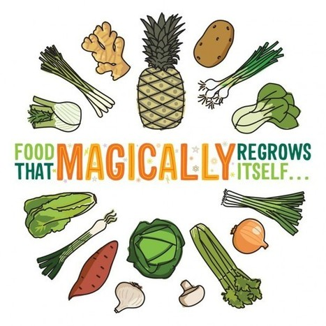Food That Magically Regrows Itself from Kitchen Scraps | Balcony Gardening | Scoop.it