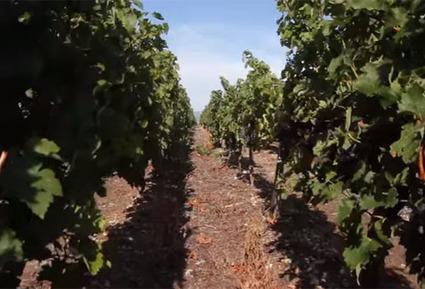Aides européennes : le domaine viticole du prince Albert de Monaco a reçu 273 000 euros | Le vin quotidien | Scoop.it