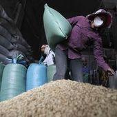 Le climat favorise les récoltes, les prix alimentaires reculent   Questions climatiques   Scoop.it