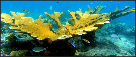 Are corals animals or plants? | Sea Pollution | Scoop.it