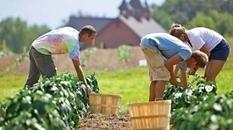 La agricultura orgánica y sus efectos sobre el medioambiente: AGRO Noticias | Horticultura | Scoop.it