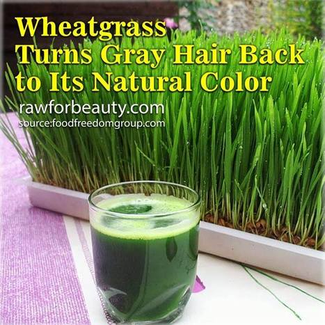 Wheatgrass Turns Gray Hair Back to Its Natural Color | RAW FOR BEAUTY | Solutions For Grey Hair | Scoop.it