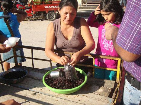 Venta de hormigas causa sensación en mercado de Moyobamba - Radio Programas del Perú | mishormigas.wordpress.com | Scoop.it