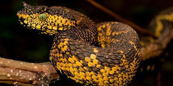 Horned Snake Found in Tanzania - Articles About Science | Topics of my interest | Scoop.it