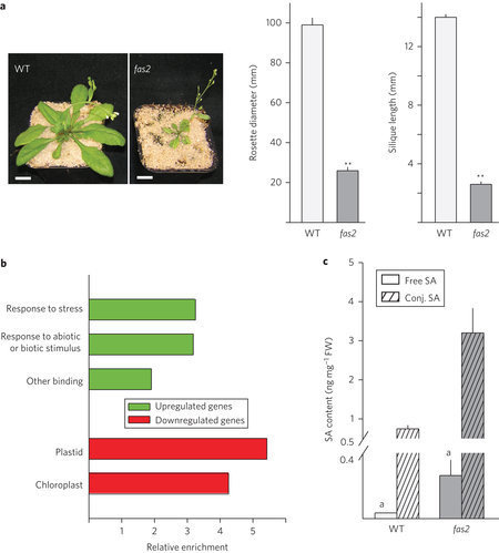 Chromatin assembly factor CAF-1 represses priming of plant defence response genes | Plant-microbe interaction | Scoop.it
