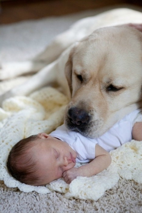 25 Cute Pictures Of Babies Sleeping with Pets | EntertainmentMesh | Scoop.it