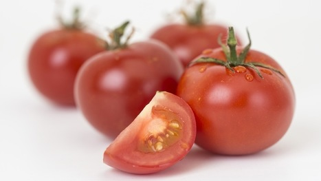Scientists turn tomatoes into efficient medicinal compound factories | Knowmads, Infocology of the future | Scoop.it