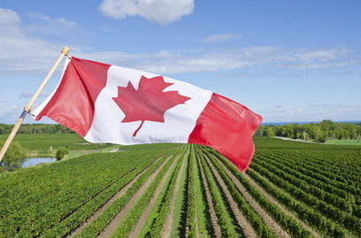 10 Surprising Facts about Canadian Wine - Natalie MacLean | Everything about wine | Scoop.it