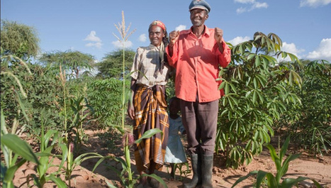 Getting seed to smallholders needs a business approach - SciDev (2013) | Food Policy | Scoop.it