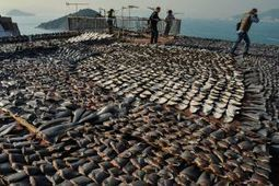 In Asia, tide slowly turning against shark fin soup | Water Stewardship | Scoop.it