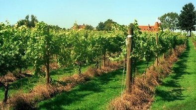 #BBC NEWS: Why southern #England is enjoying a #wine renaissance | Vitabella Wine Daily Gossip | Scoop.it