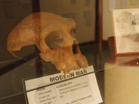 Out of Africa, the skull and the museum guide - The Independent | Intro to History and Early Man | Scoop.it