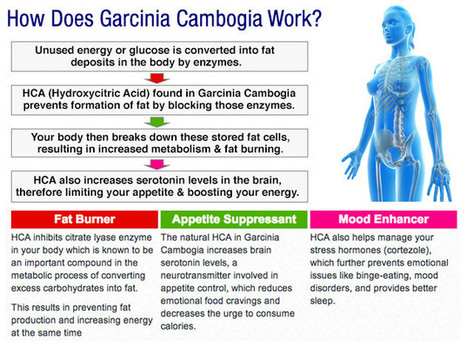 where to find garcinia cambogia | scoop | Scoop.it