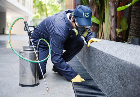 OSS Pest Control Services India | Pest Control | Scoop.it