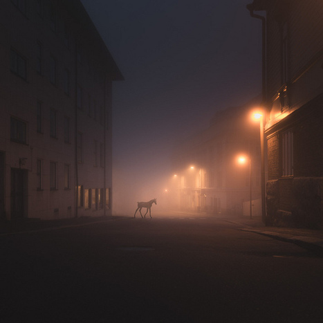 Wild Animals Stalk the Streets of a Small Town in Finland at Night | Colossal | Farm and Animal Safety | Scoop.it