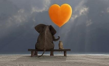 Rakkaudella johtaminen pesee pirulliset kollegat — Hyvejohtajuus.fi | Professional development and management skills | Scoop.it
