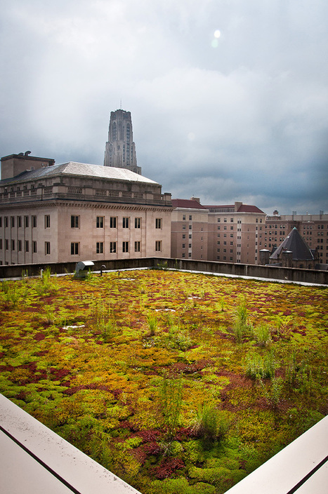 Thinking Green in Pittsburgh | Geography Education | Scoop.it