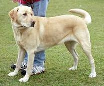 raymondmwilkins's Journal Entry: Several tips on dog training salt lake city | dog grooming utah | Scoop.it
