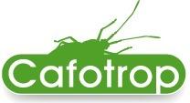 À la recherche des ancêtres des insectes | EntomoNews | Scoop.it